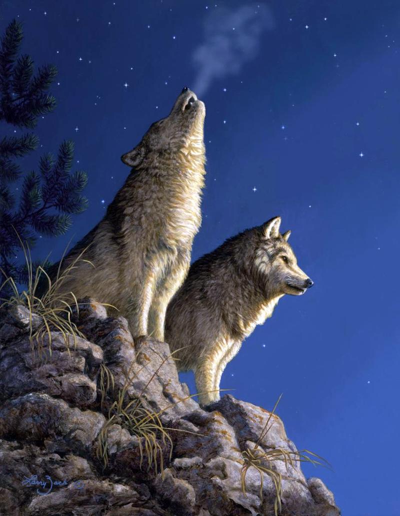 Анимация волков картинка, днем рождения