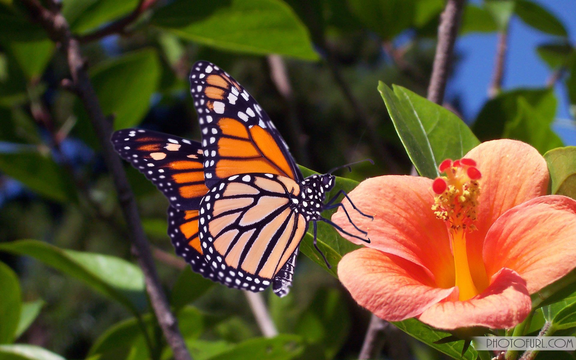 Beautiful Butterflies Pictures Free Download Butterfly Wallpaper