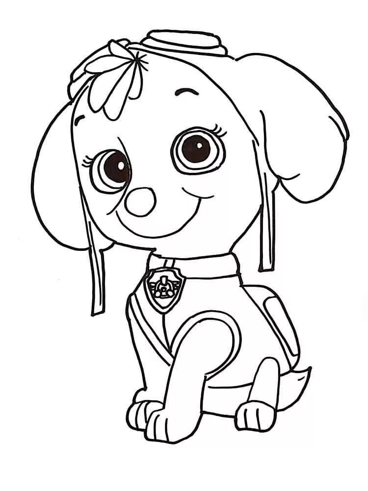 скай щенячий патруль для срисовки: 8 тыс изображений ...