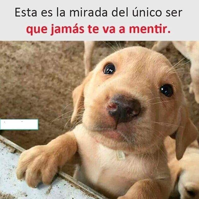"""Photo of woopy on Instagram: """"En un mundo muy caótico son ellos los que me regresan a mi centro #Perritos #Perros🐶❤️"""""""