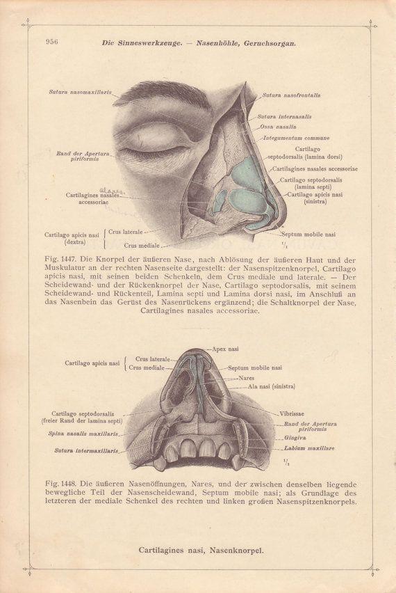 Vintage Medical Page Anatomical Diagram Human Nose Teeth Face ...
