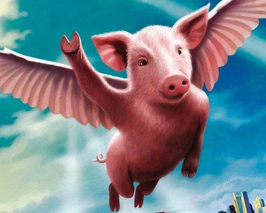 Rock On Flying Pigs Flying Pig Pig Animals