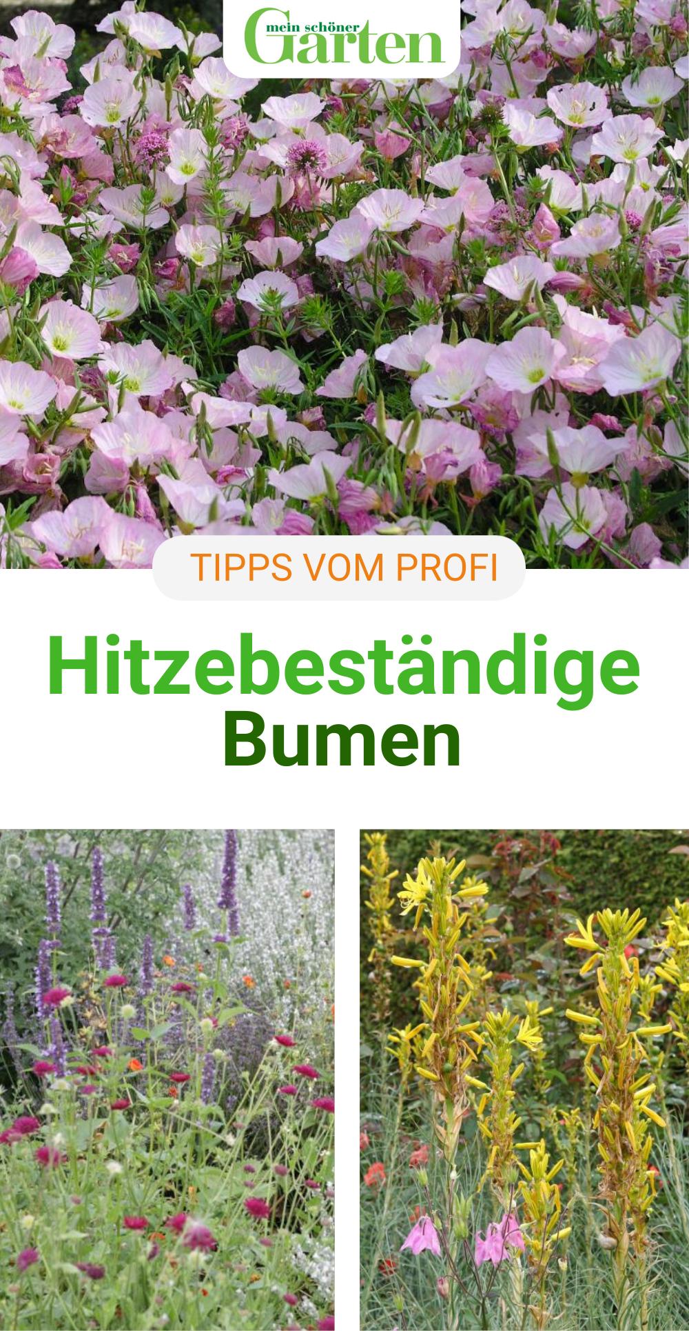 Für das Blumenbeet: Hitzebeständige Blumen