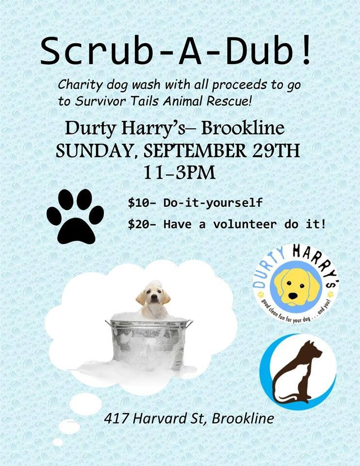 Mark Your Calendars Dog Wash Fundraiser At Durty Harry S In Brookline On Sept 29 To Benefit Dog Charities Animal Shelter Fundraiser Animal Rescue Fundraising