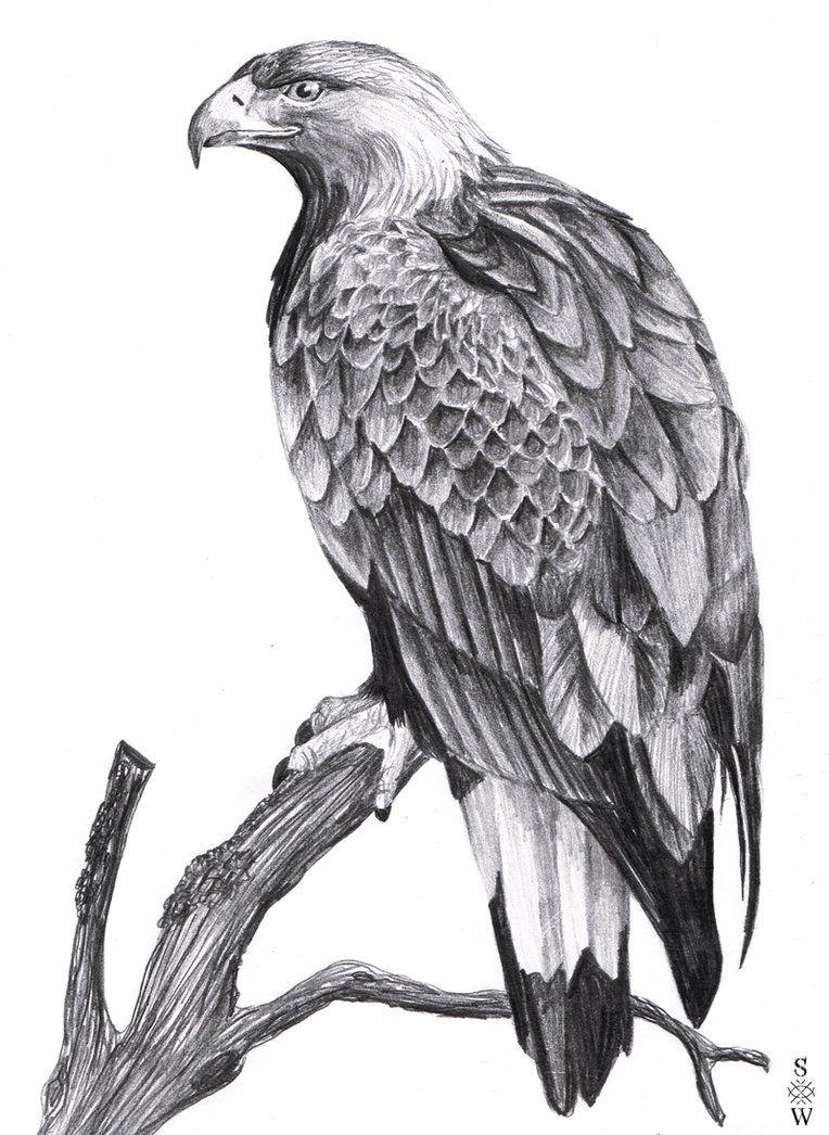 eagle drawing - Google Search | Birds | Pinterest | Eagle ...