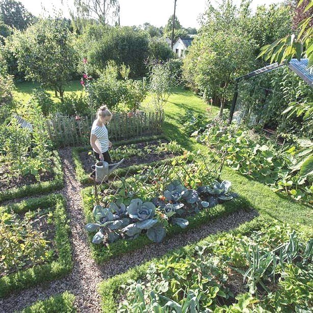 how to grow a veggie garden #vegetablegarden #veggiegardens