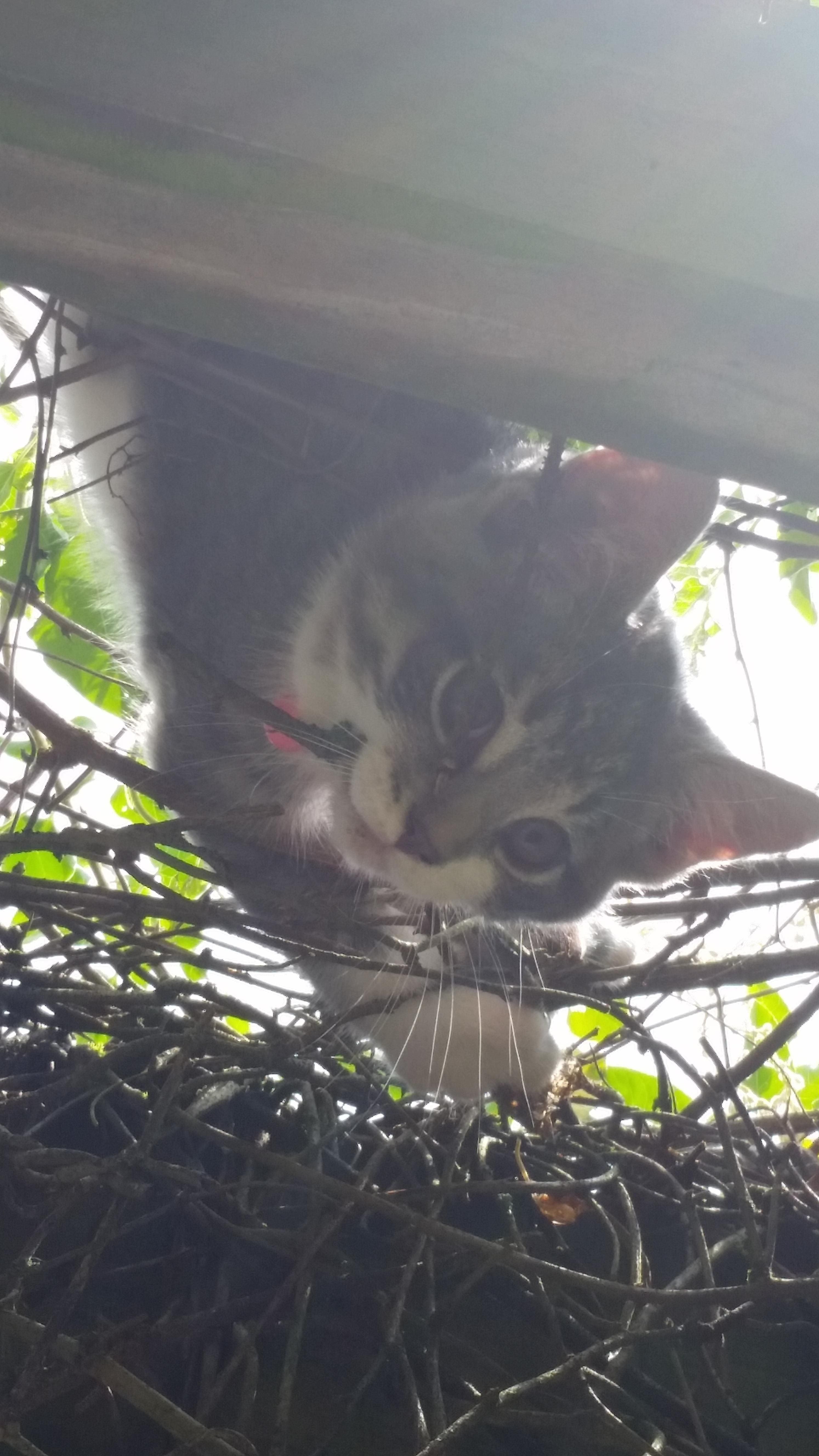 My Friend S Kitten Hanging Out Above The Porch Http Bit Ly 2cow0qo Kitten Cute Animals Hanging Out