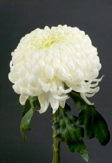 d233cryptez le langage des fleurs significado de las
