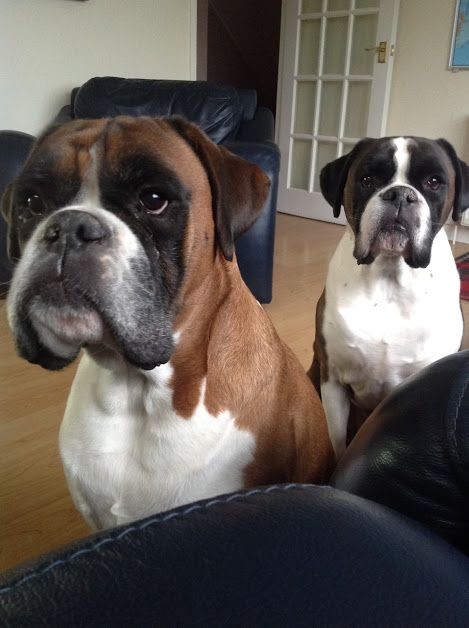 Archie Alfie Newly Adopted Twins From Scotland Newly Re Homed