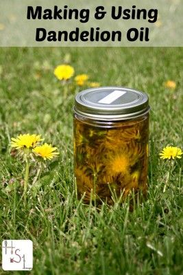 Making Dandelion Oil for Arthritis and Joint Pain Relief