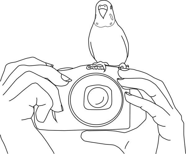Parakeet Parakeet Standing On Camera Coloring Page Coloring
