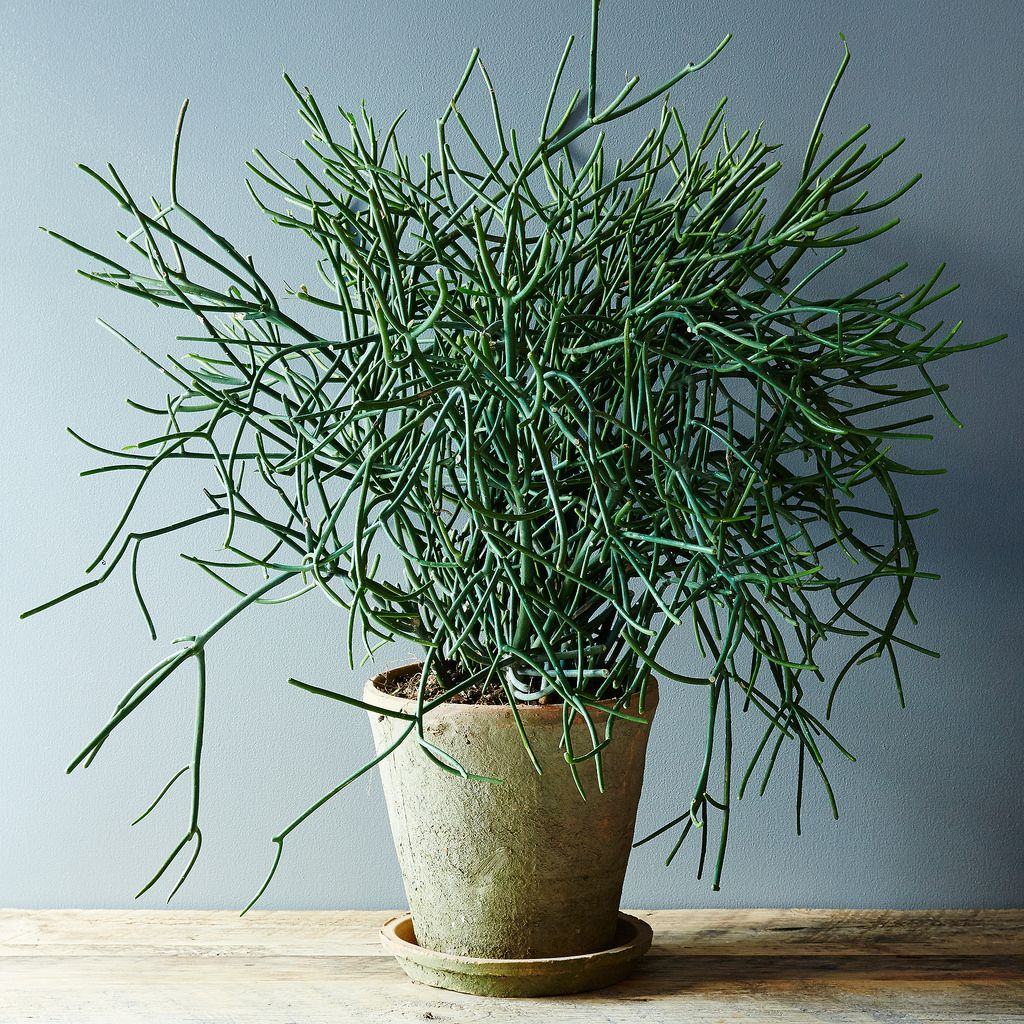 5 nokill houseplants for any home