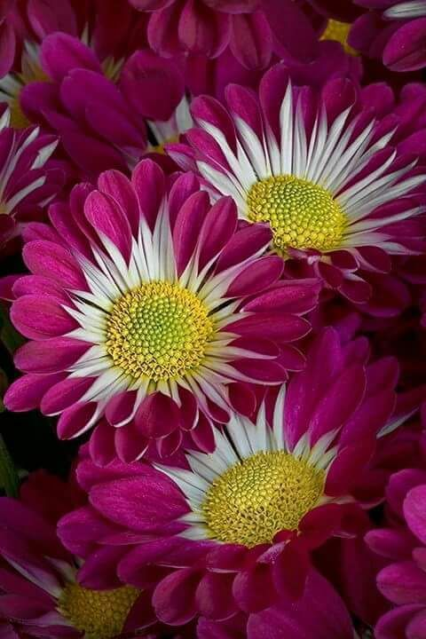So Beautiful One Word For This Pic 1 000 000 Fotograf Beautiful Flowers Amazing Flowers Love Flowers