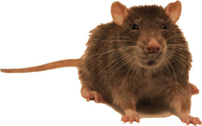 Almost all of us face problems of pest infestation at our
