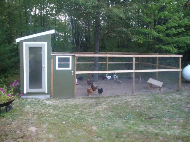 OLSON COOP DESIGNAfter Considerable Discussion, My Daughter, Natalie, And  My Wife, Marina. Backyard ChickensBackyard ...
