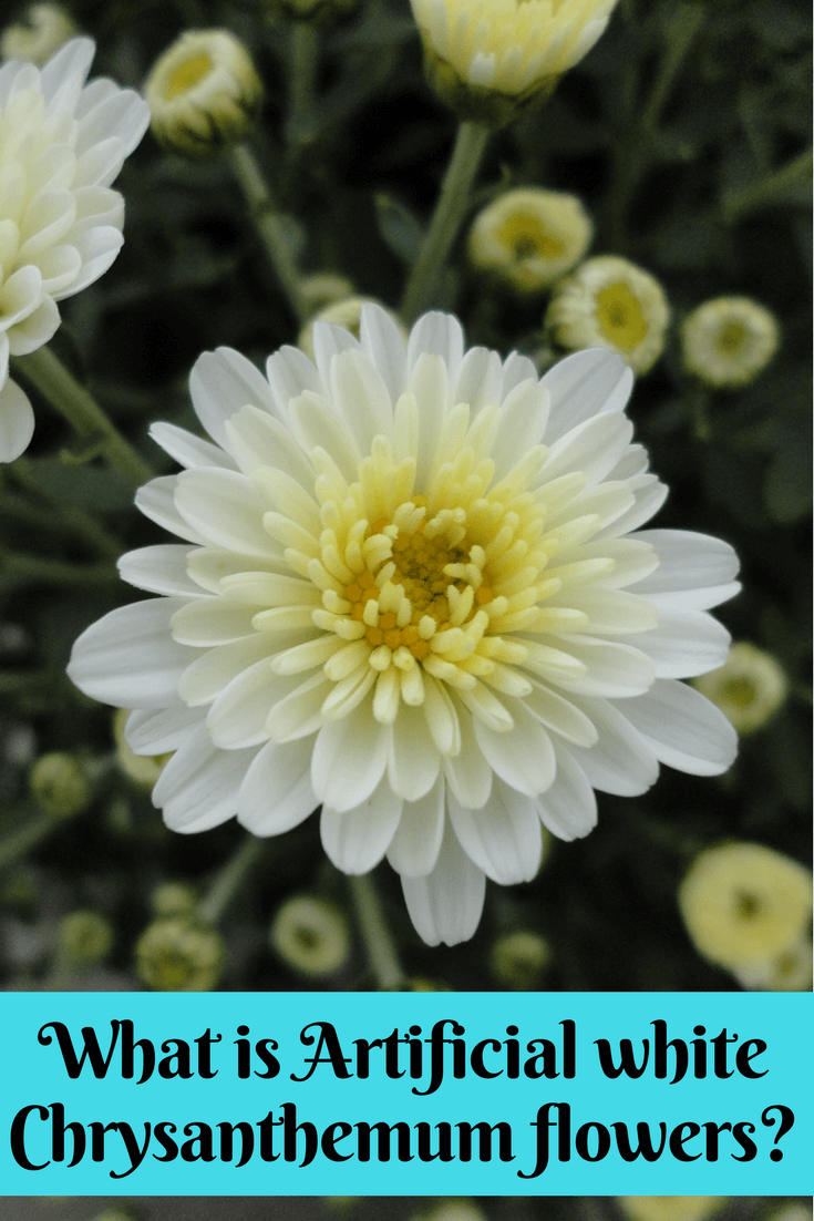 What is artificial white chrysanthemum flowers chrysanthemum what is artificial white chrysanthemum flowers white chrysanthemum living room decorations special flowers mightylinksfo