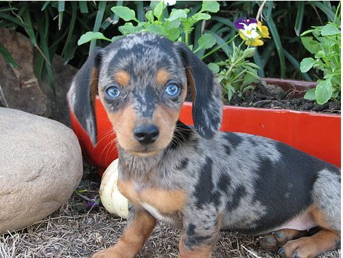 Give Me This Pup Please Only A Few More Months Then I Get One 3