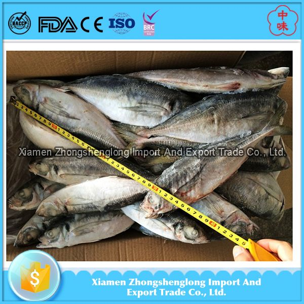 New Landing Frozen Horse mackerel importers in Africa