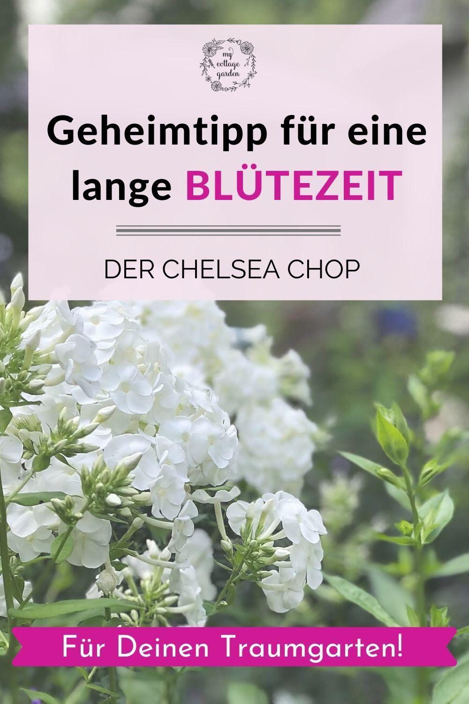 Chelsea Chop Geht Den Pflanzen An Den Kragen In 2020 Pflanzengestaltung Pflanzen Pflegeleichte Pflanzen