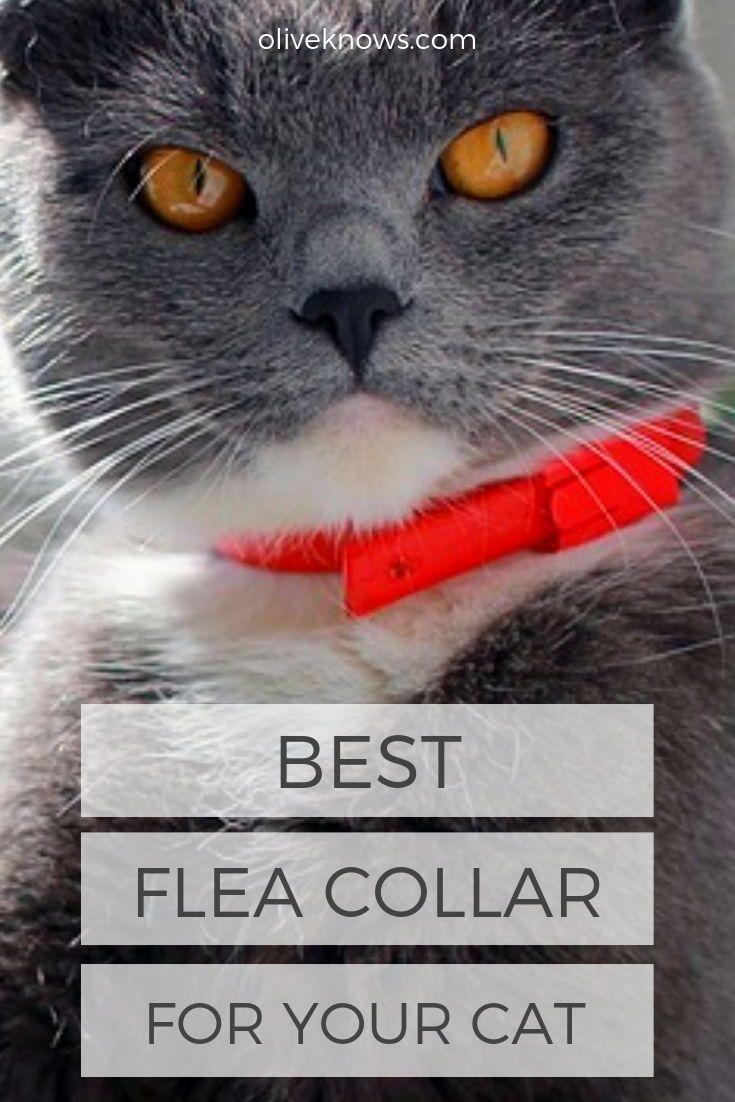 Best Flea Collar for Your Cat Cat fleas, Cat illnesses