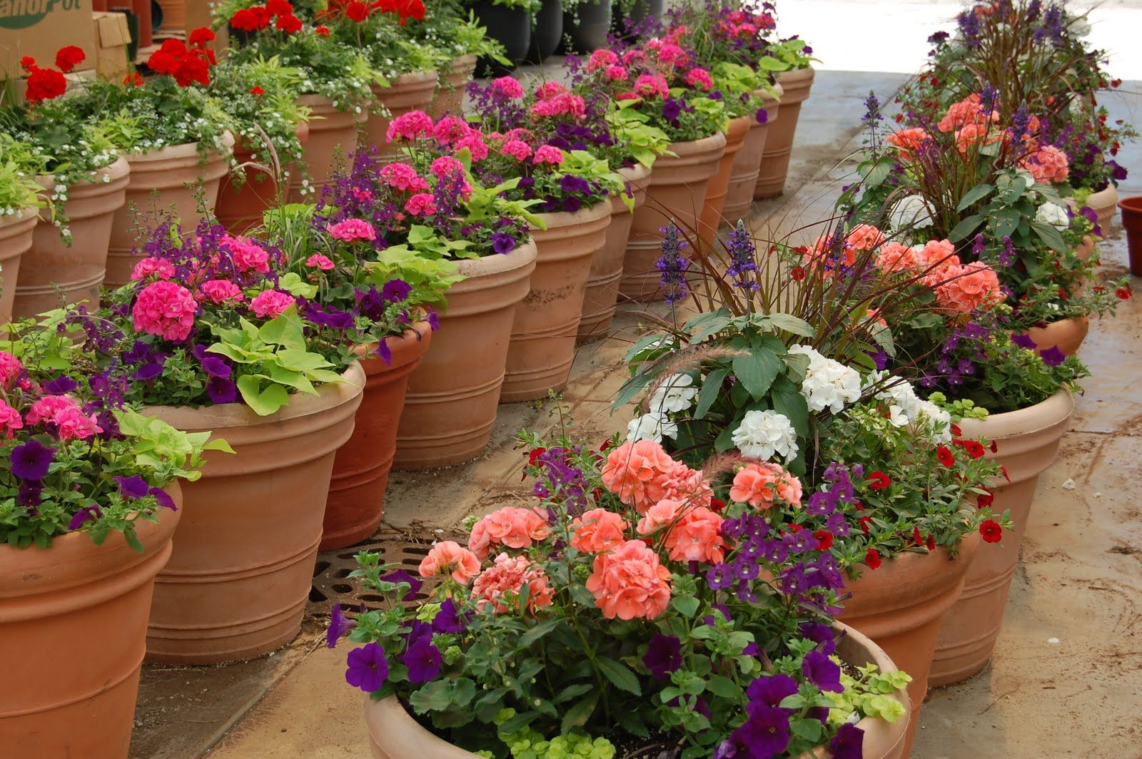 Container Garden On Patio | Schaefer Greenhouses: How To Plant a ...