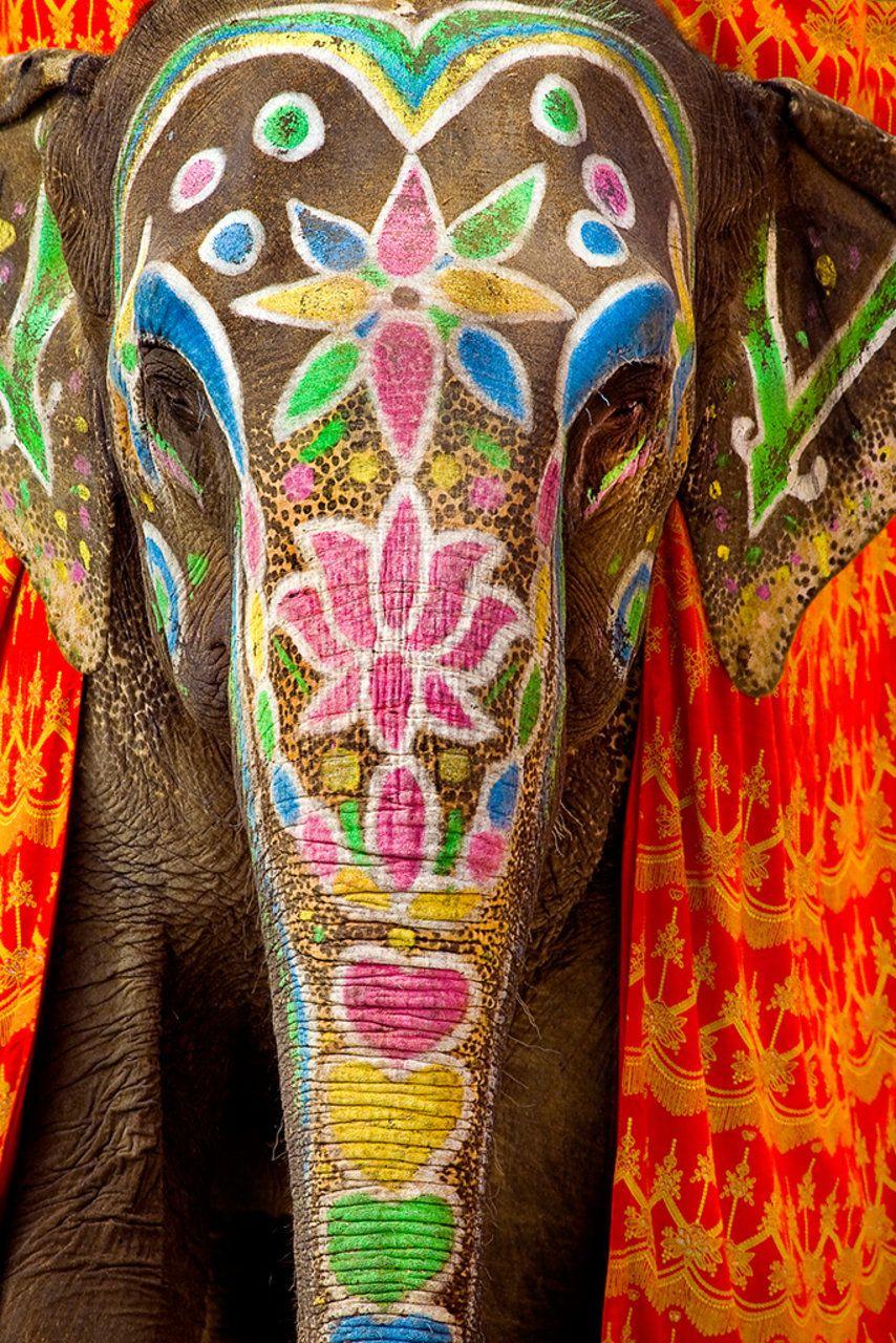 Majestic Indian elephant