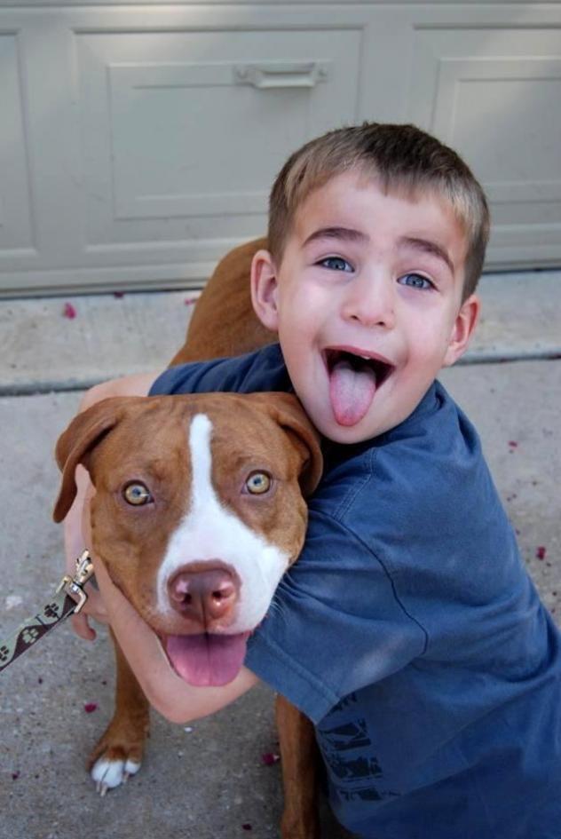 Adopt Bella on Dogs, Adoption, Boxer mix