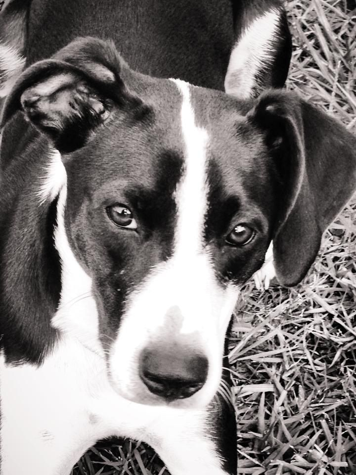 Pin By Lori Haws On Cute Animals Cute Dogs Breeds Border Collie Mix Puppies Picture Borders