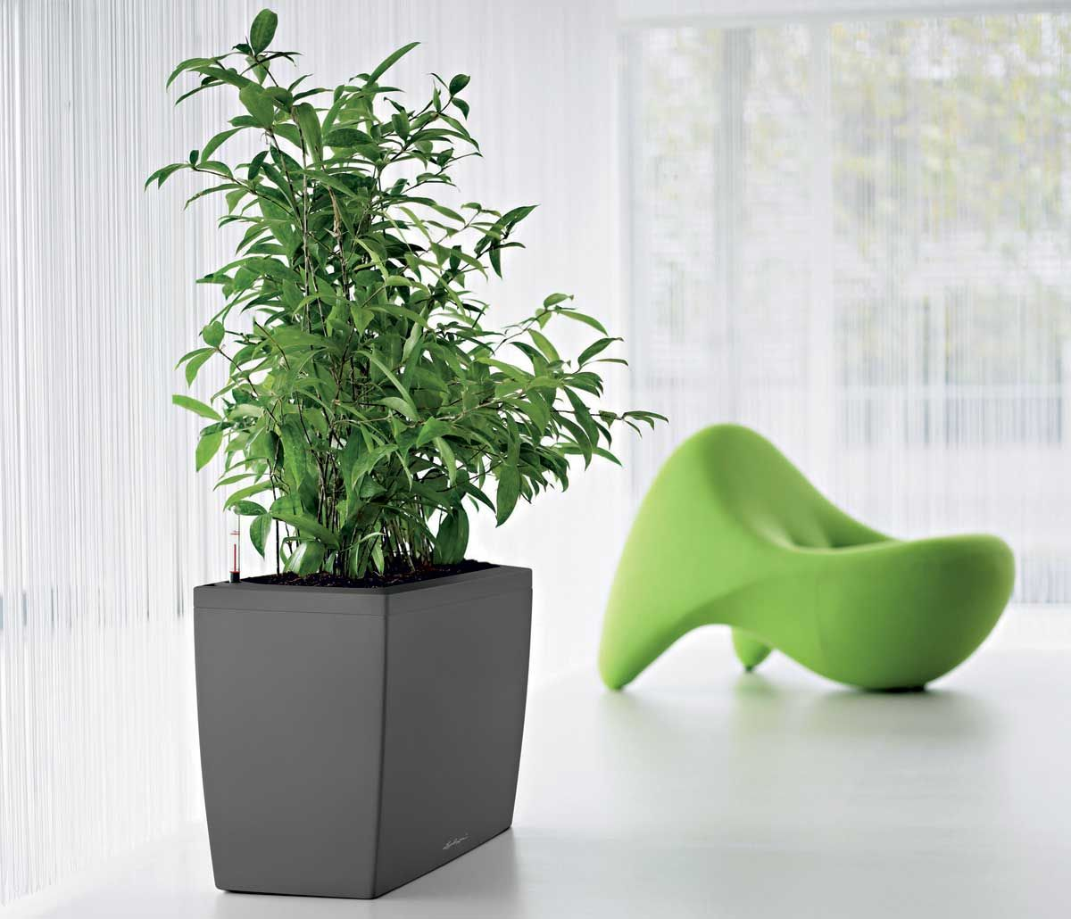 Green indoor office plants kerr pinterest office for Modern indoor plants