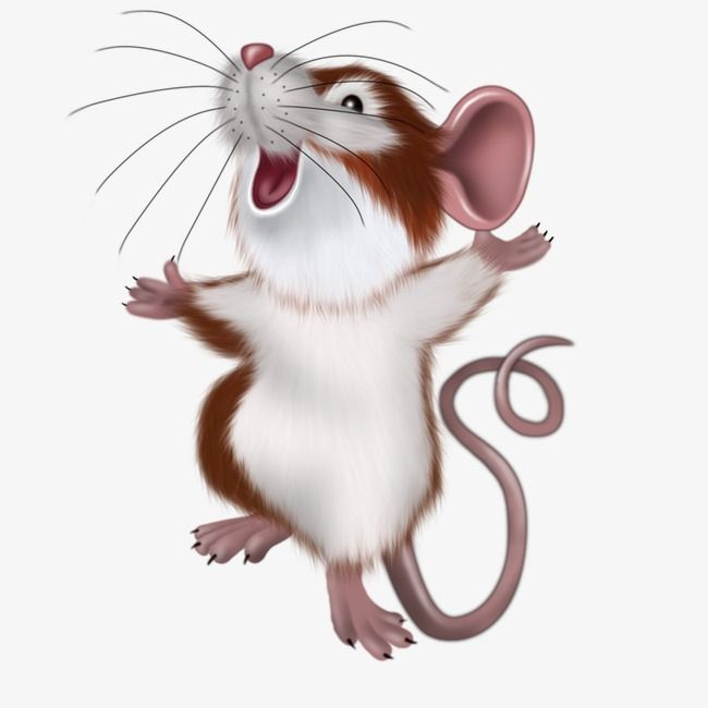 Mouse Mouse Illustration Cute Animal Drawings Art