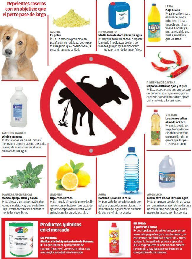 Los Remedios Químicos Y Caseros Que Evitan Las Micciones Que Los Perros Realizan Por Instinto Para Repelente Para Perros Consejos Para Mascotas Orina De Perro