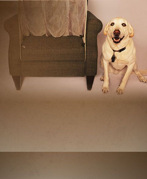 How To Keep Dogs Off Your Furniture Couch Defender Couch