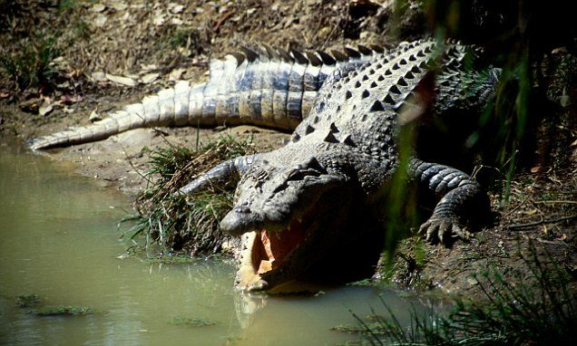 Crocodile bile beer kills 56 people  http://www.dailymail.co.uk/news/article-2905843/Poisoned-beer-kills-56-funeral-49-hospital-local-brew-thought-contaminated-crocodile-bile.html