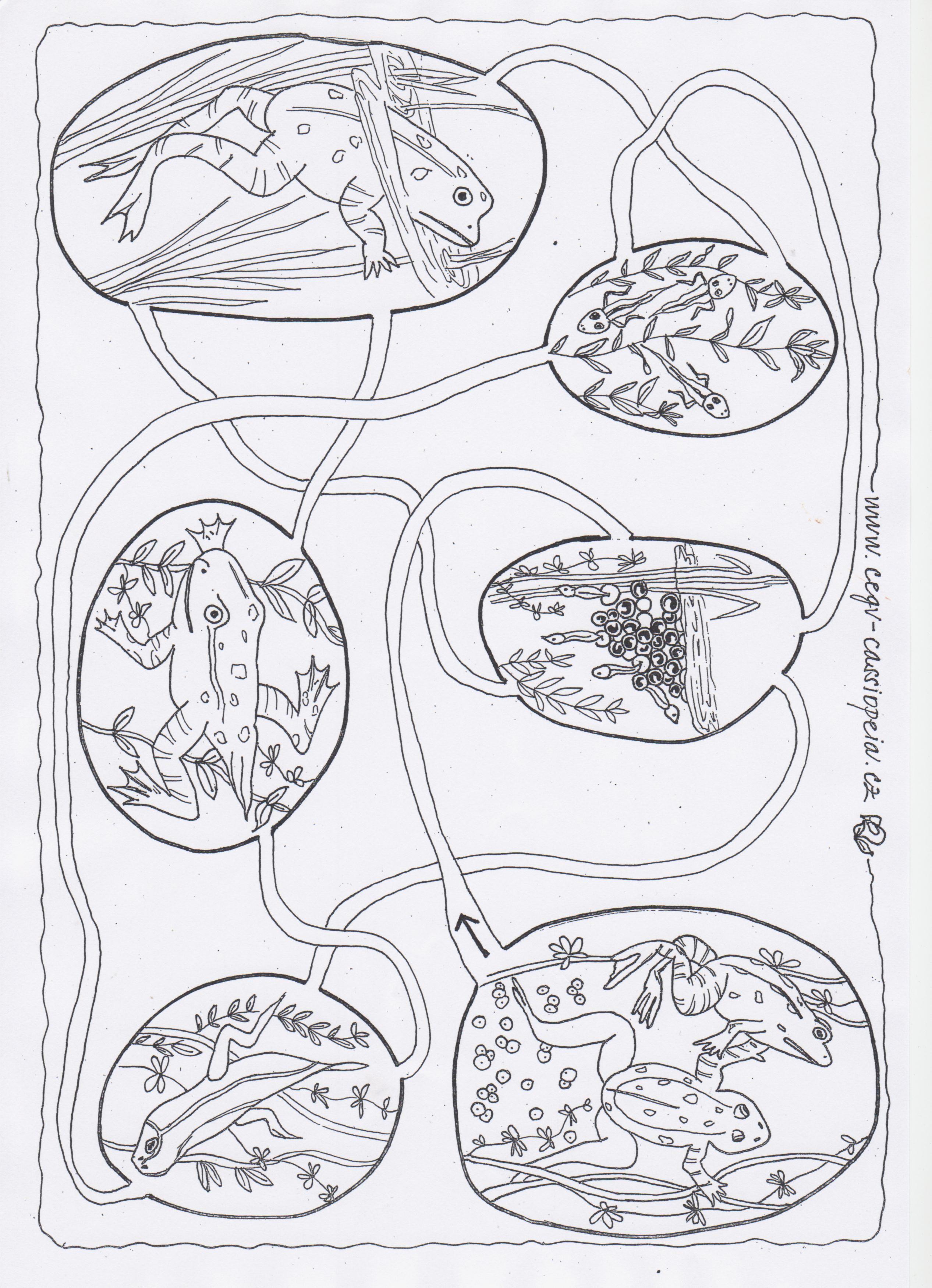 Pracovni Listy Rybnik