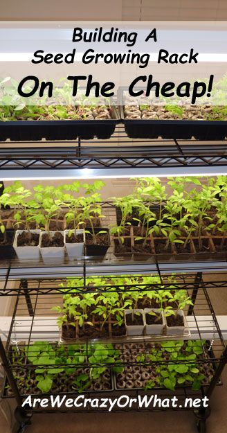 Best 25 Cheap Grow Lights Ideas On Pinterest Grow