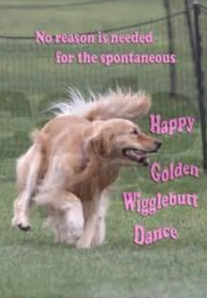 Happy Golden Wigglebutt Dance Dog Love Dogs Golden Retriever
