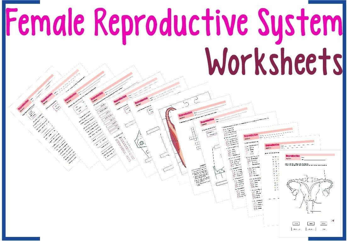 The Menstrual Cycle Worksheet Answers Worksheets 1 A Color And Label With Code Worksheet 2 A In 2020 Female Reproductive System Reproductive System Teaching