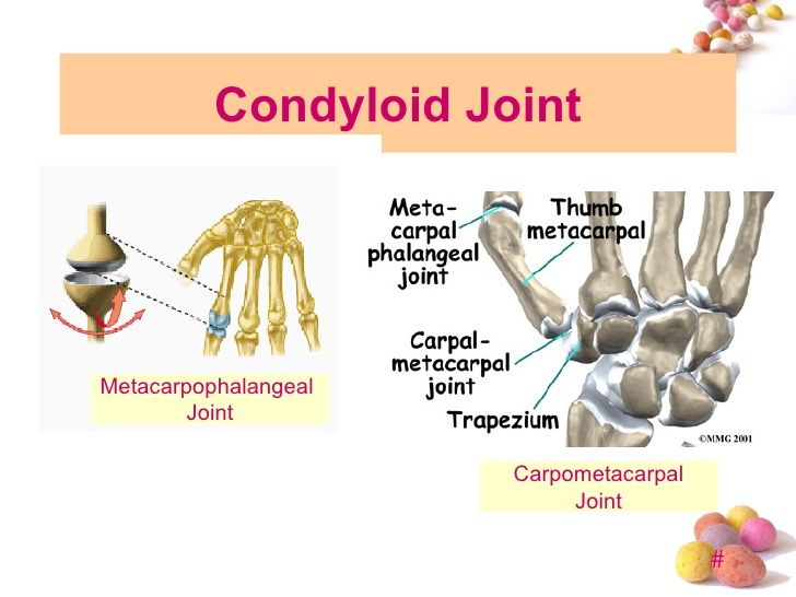 Topic 4 Joint Pilates Pinterest Synovial Joint