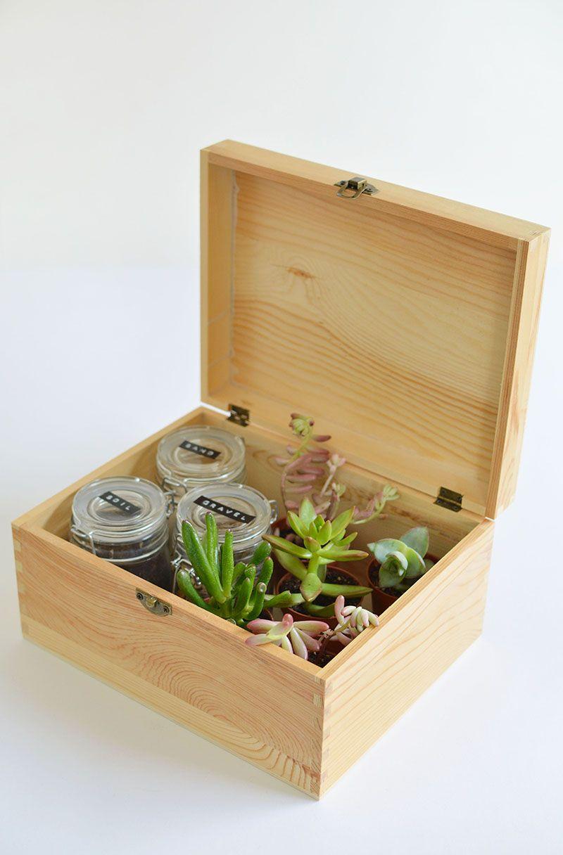 Diy Succulent Gift Box Succulents Diy Gifts Succulents Diy