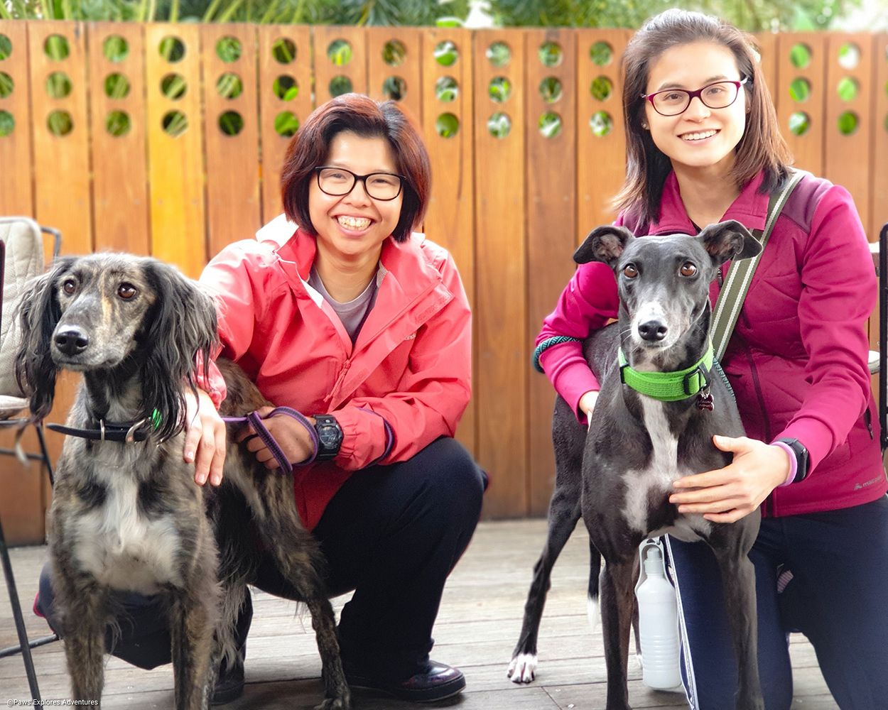 2019 Paws Explores Pet Amazing Race May 26 Australian Dog