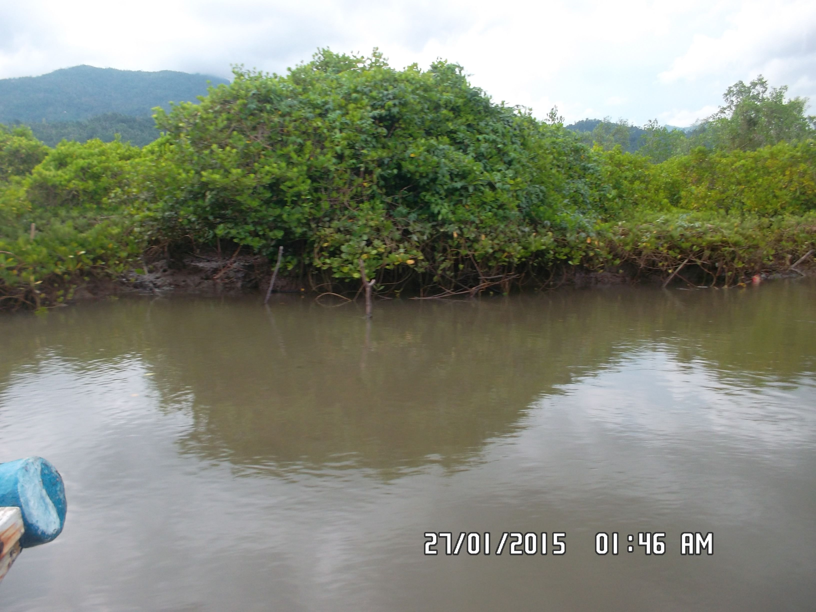 Taman Wisata Mangrove Cengkrong Trenggalek Jatim Indonesia