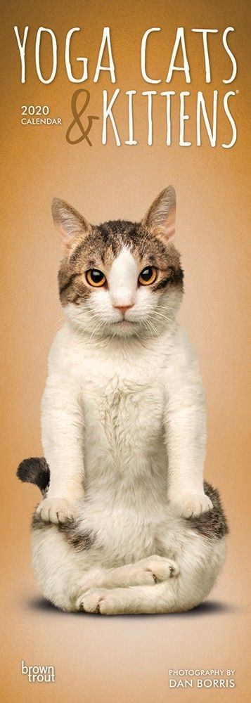 Yoga Cats Kittens 2020 6 75 X 16 5 Inch Monthly Slimline Wall Calendar Feline Humor Isbn 978 1 7899 3044 3 Cat Yoga Cats And Kittens Cats