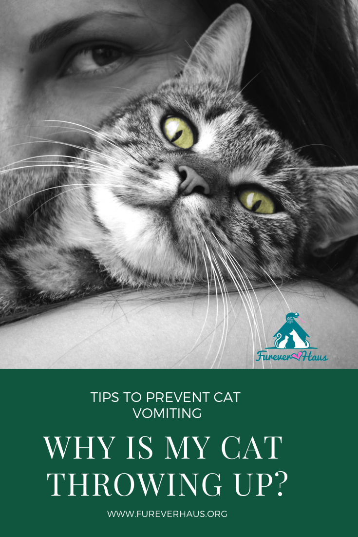 Why Is My Cat Throwing Up? Cat throwing up, Cats, Cat care