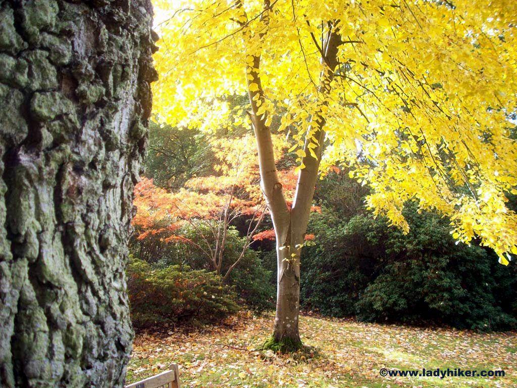 Exbury Gardens, Hampshire http://ladyhiker.com/