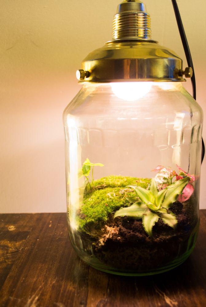 Gespot In Utrecht Mini Ecosysteem Vermomd Als Lamp Terraria