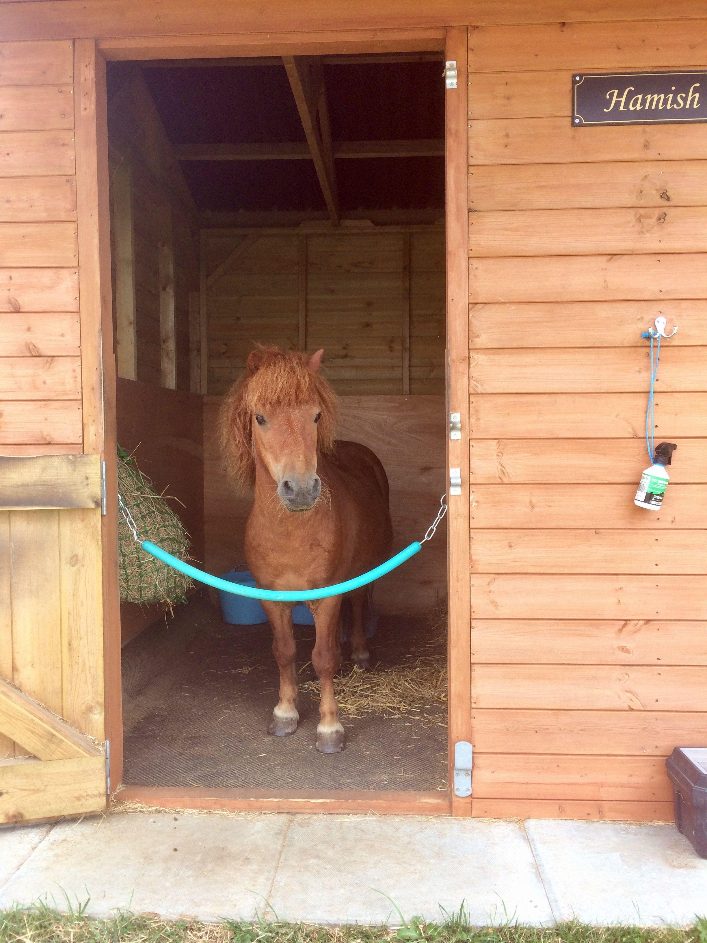 Hamish The Shetland Pony In His Stable Mini Horse Barn Dream Horse Barns Mini Pony Mini horse in my backyard