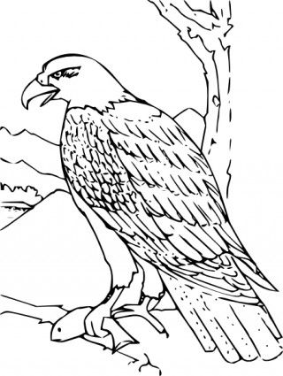 Bald Eagle Coloring Page For Kids