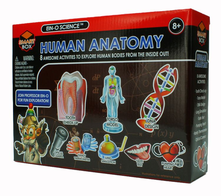 Tedco Toys Human Anatomy Science Kit Human Anatomy Science Kits