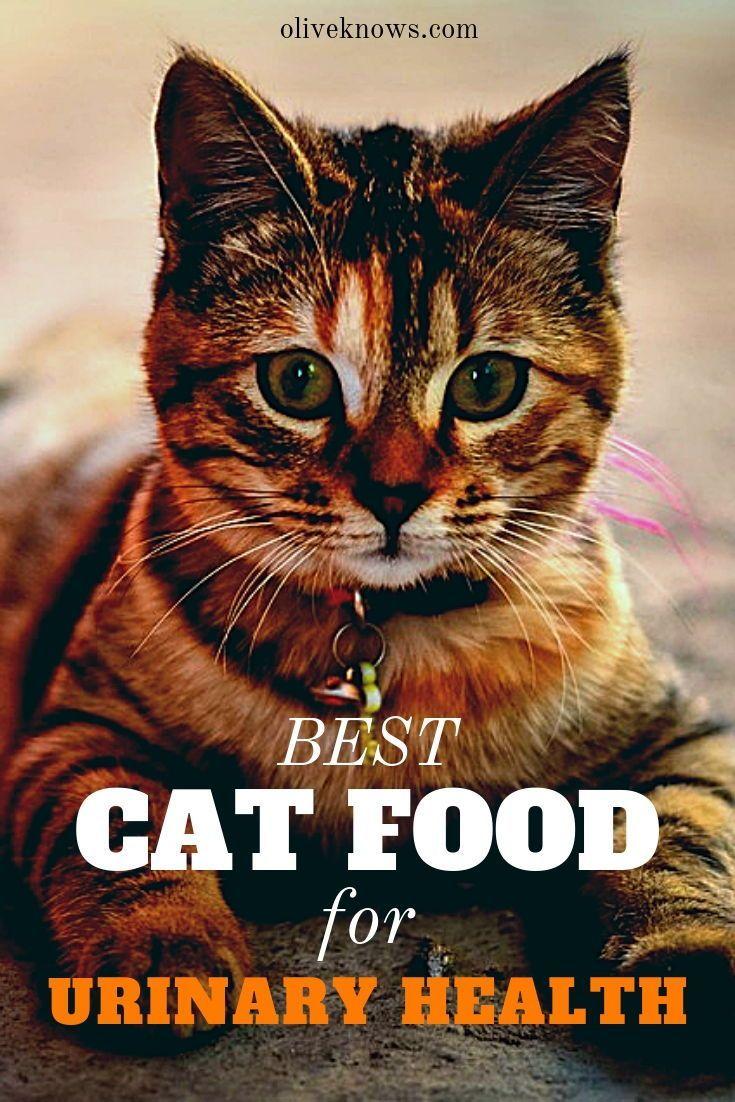 wellness core cat food dry