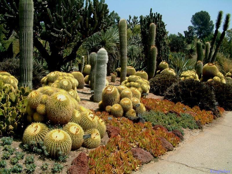 Nice Cactus Garden Design #6 Cactus Garden Zakta Guide